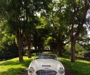 restauration_austin_healey_1